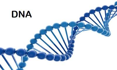 Nieuwe DNA-test bij MyHeritage